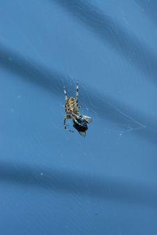 Free Spider, Arachnid, Invertebrate, Arthropod Stock Image - 134213841