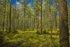 Free Ecosystem, Temperate Broadleaf And Mixed Forest, Spruce Fir Forest, Nature Royalty Free Stock Photos - 134213978