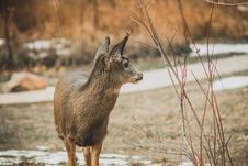 Free Deer Standing In Forest Royalty Free Stock Image - 134249746