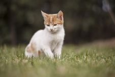 Free Selective Focus Of Cat Sitting On Grass Field Stock Photo - 134249820