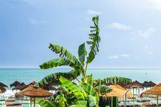 Free Banana Tree On Beach Royalty Free Stock Photography - 134249827