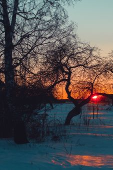 Free Trees On Snowy Field At Sunset Stock Photography - 134249892