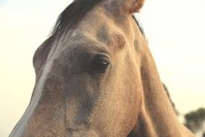 Free Close-up Photo Of Brown Horse Royalty Free Stock Photography - 134249947