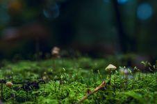 Free Shallow Photography Of Yellow Mushroom On Moss Royalty Free Stock Image - 134421126