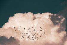 Free Flock Of Birds Flying Near White Clouds Royalty Free Stock Image - 134421136