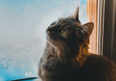 Free Close-up Photo Of Cat Beside A Window Looking Up Royalty Free Stock Photography - 134421357