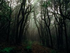 Free Photo Of Forest With Fog Royalty Free Stock Image - 134472716