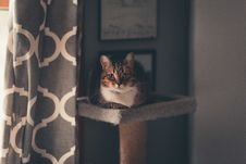 Free Brown Tabby Cat Sitting On Cat Tree Stock Photography - 134472742
