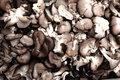 Free Mushrooms Royalty Free Stock Photo - 13465445