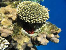 Free Tropical Coral Reef Stock Image - 13468581