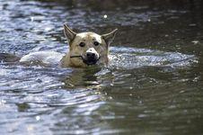 Free Dog, Water, Dog Like Mammal, Dog Breed Group Royalty Free Stock Photo - 134700565