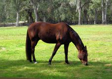 Free Horse, Pasture, Grazing, Mare Royalty Free Stock Photo - 134700695