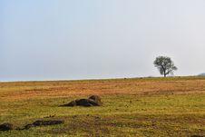 Free Grassland, Ecosystem, Savanna, Pasture Royalty Free Stock Images - 134700739