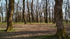 Free Woodland, Tree, Ecosystem, Grove Royalty Free Stock Image - 134700866