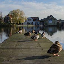 Free Waterway, Reflection, Water, Bird Stock Images - 134700974