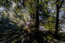 Free Nature, Tree, Vegetation, Woodland Stock Images - 134701004