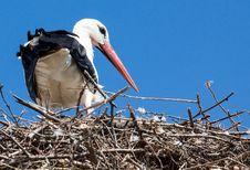 Free White Stork, Stork, Bird, Beak Stock Photos - 134701043