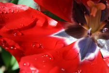 Free Flower, Red, Flora, Petal Stock Photography - 134701182