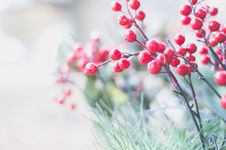 Free Selective Focus Photography Of Red Berries Royalty Free Stock Images - 134721849