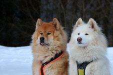 Free Dog, Dog Like Mammal, Dog Breed, Mammal Royalty Free Stock Images - 134764939