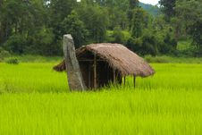 Free Field, Agriculture, Paddy Field, Grassland Royalty Free Stock Photos - 134765238