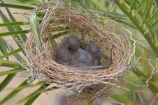 Free Nest, Bird Nest, Bird, Fauna Stock Photography - 134765422