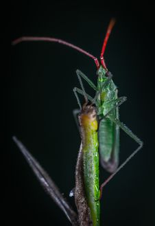 Free Green Bug In Close-up Photography Stock Images - 134821794