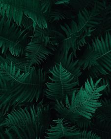 Free Photo Of Green Fern Leaves Stock Photo - 134821860