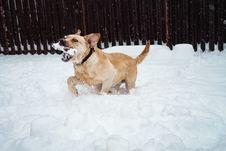 Free Dog Walking Along Snow While Biting Bone Royalty Free Stock Image - 134822146
