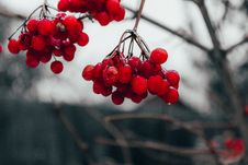 Free Red Cherry Fruit Stock Images - 134879594