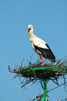 White Stork Relaxing In Its Nest Royalty Free Stock Photos