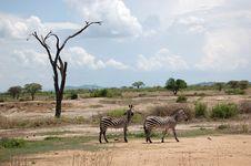 Free Wildlife, Ecosystem, Savanna, Grassland Royalty Free Stock Image - 134930316