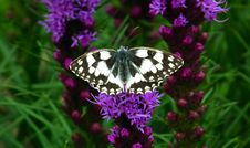 Free Butterfly, Moths And Butterflies, Flower, Brush Footed Butterfly Stock Photography - 134930412