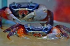 Free Crab, Freshwater Crab, Dungeness Crab, Decapoda Royalty Free Stock Image - 134930496