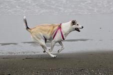 Free Dog, Dog Breed, Dog Like Mammal, Dog Breed Group Stock Photo - 134930500