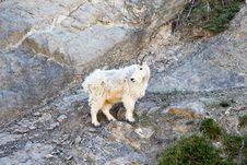 Free Mountain Goat, Fauna, Goats, Wildlife Stock Photo - 134930830