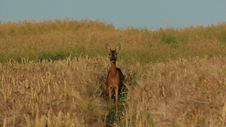 Free Wildlife, Ecosystem, Grassland, Fauna Royalty Free Stock Photos - 134931038