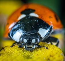 Free Orange And Yellow Bug Royalty Free Stock Images - 134952689