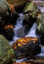 Free Ramapo Stream1 Royalty Free Stock Photography - 1357907