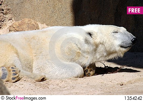 Sleepy polar bear Stock Photo