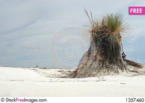 Desert vegetation Stock Photo