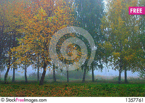 Russian forest Stock Photo