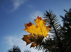 Free Autumn Leaves Stock Image - 1351031