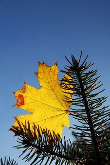 Autumn Theme Royalty Free Stock Image