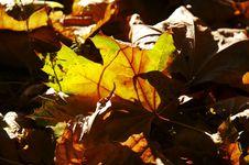 Free Autumn Stock Photo - 1351090