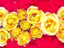 Free Flower Pattern Stock Image - 1351251