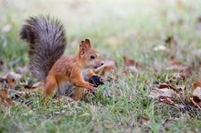 Free Squirrel Stock Photos - 1351413