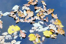 Free Floating Leaves Stock Photography - 1351502
