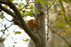 Free Squirrel Stock Photo - 1351710