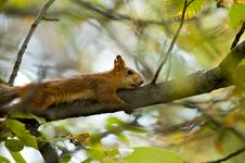 Free Squirrel Stock Photography - 1351812